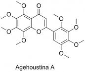 Agehoustina A