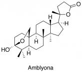 Amblyona