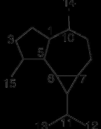 Aromadendrano