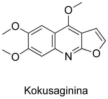Kokusaginina