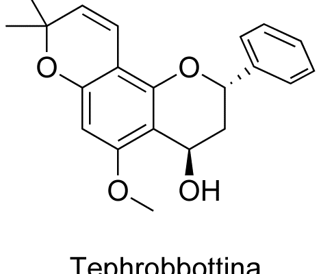 Tephrobbittina