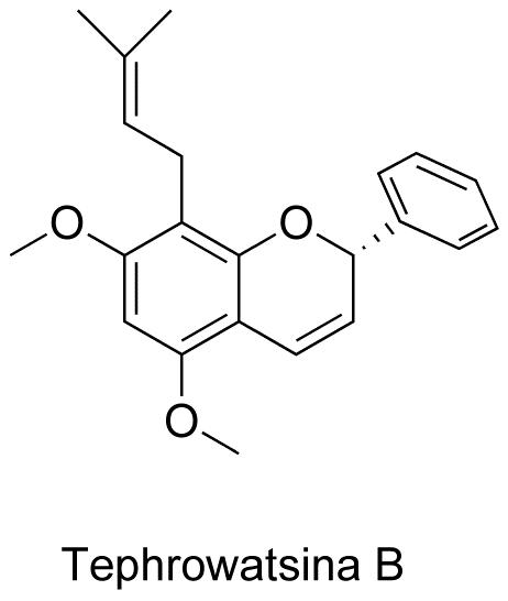 Tephrowatsina B