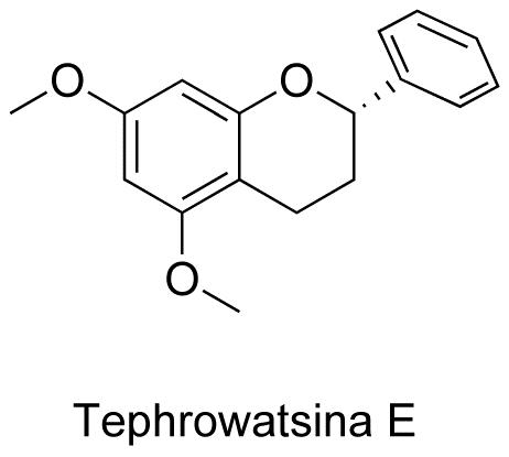 Tephrowatsina E