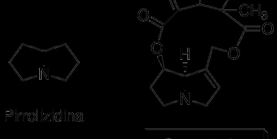 Alcaloides pirrolizidínicos