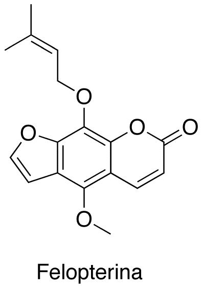 Felopterina