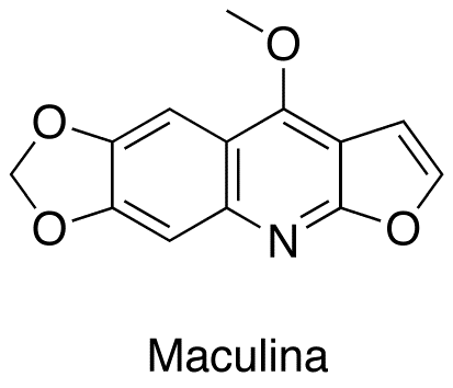 Maculina