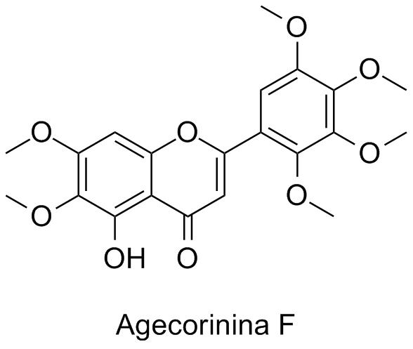 Agecorinina F