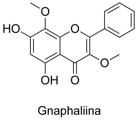 Gnaphaliina