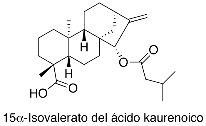 15α-Isovalerato del ácido kaurenoico