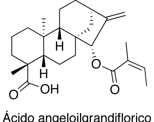 Ácido angeloilgrandiflorico
