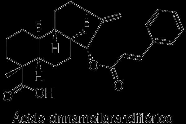 Ácido cinnamoil grandiflorico