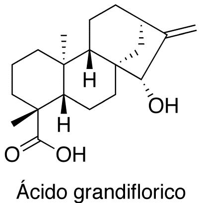 Ácido grandiflorico