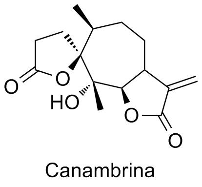 Canambrina