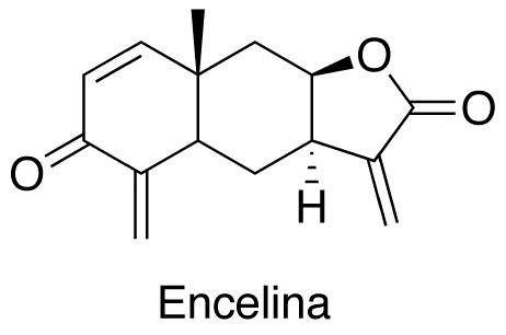 Encelina