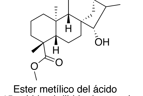 Éster metílico del ácido 15-α-hidroxi-dihidro-kaurenoico