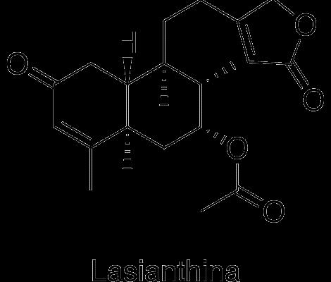 Lasianthina