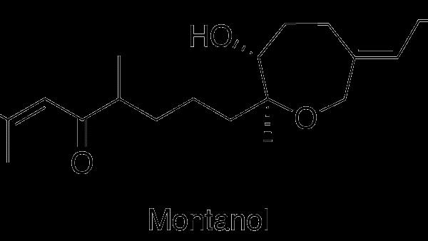 Montanol