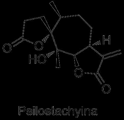 Psilostachyina