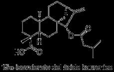 15α-Isovalerato del ácido kaurenico