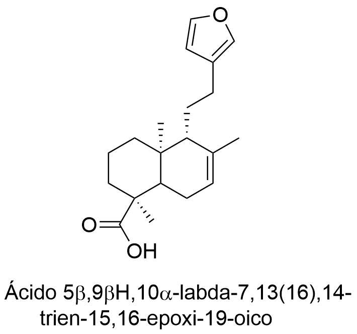 Ácido 5β